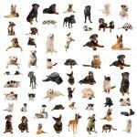 chiens, chiots et chats — Photo
