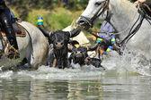 Byk i konie w wodzie — Zdjęcie stockowe