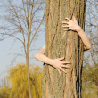 Stock Photo: Treehugger