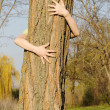 treehugger — Stock Photo