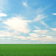 Stock Photo: Green meadow and blue sky