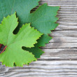 Stock Photo: Grapes leaves