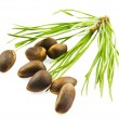 Cedar nuts with needles — Stock Photo #3136618
