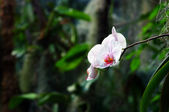 Mooie witte orchidee — Stockfoto