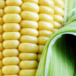 Maize cob detail with green leaves — Stock Photo