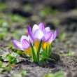 Beautiful Spring Flowers on the natural background — Stock Photo