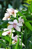 Bellissima orchidea bianca alla luce del sole sopra lo sfondo naturale — Foto Stock