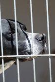 Caged Dog — Stock Photo