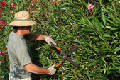 Gardener Pruning — Stock Photo