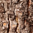 Pine wood texture — Stock Photo