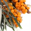 Sea buckthorn branch — Foto Stock