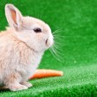 Rabbit and carrot on grass - Stock Photo