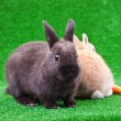 Two little bunnies - Stockfoto