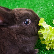 Cute bunny eating - Stockfoto