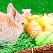 Easter eggs and bunny in nest — Stock Photo