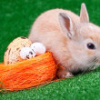 Stock Photo: Rabbit and eggs in nestle