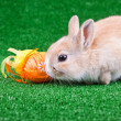 Bunny and easter eggs — Stock Photo