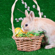 Bunny on easter eggs — Stock Photo