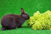 Hungry domestic rabbit — Stock Photo