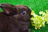 Cute bunny eating — Stock Photo
