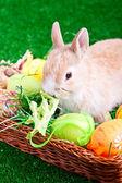 Paskalya tavşanı ve yumurta — Stok fotoğraf