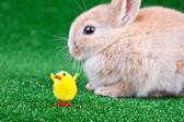 Chicken and rabbit — Stock Photo