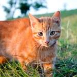 Orange cat — Stock Photo