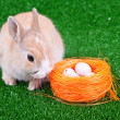 Stock Photo: Nestle, eggs and easter bunny