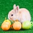 Rabbit and eggs on grass — Stock Photo