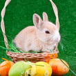 Rabbit in basket and easter eggs — Stock Photo
