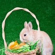 Stock Photo: Easter eggs and sniffing rabbit