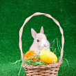 Easter nest with rabbit — Stock Photo