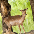 Stock Photo: Deer between trees