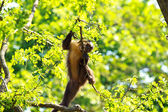Funny monkey on tree — Stock Photo