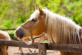 Beautiful brown horse — Stock Photo
