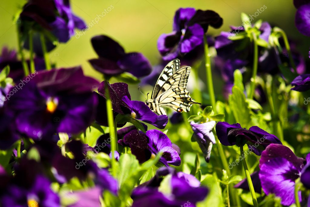 Closeup of a beautiful little butterfly on a purple flower — Stock Photo #3196490