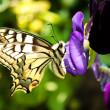 Closeup eines Schmetterlings — Stockfoto