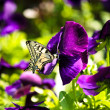 Spring butterfly - Stock Photo