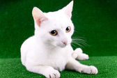 White cat on grass — Stock Photo