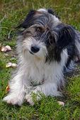 Figlarny wygląd mojego psa — Zdjęcie stockowe