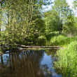 Small stream flows through alder forest — Stock Photo