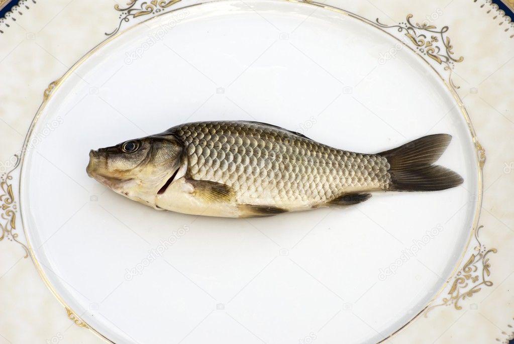 Freshwater carp - photo#16