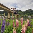 Lupine Flowers Under the Bridge — Stock Photo #3132680