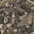 Stock Photo: MorchellMorel Mushrooms