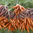 Stock Photo: Organically Grown Carrots 2
