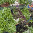 Stock Photo: Vegetable Stand at Farmers Market 2