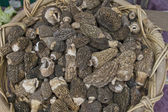 Morchella Morel Mushrooms — Stock Photo