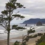Foggy Morning at Tolovana Beach Oregon 2 — Stock Photo