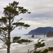 Foggy Morning at Tolovana Beach Oregon - Stock Photo