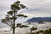 Foggy Morning at Tolovana Beach Oregon — Stock Photo